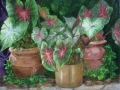 asel-art-award-jene-gravely-caladiums-in-pots-oil