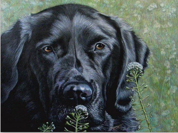 """""""Stop and Smell the Flowers"""" features Otis, Beverly's service dog"""